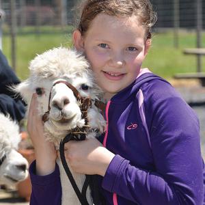 Alpaca with kid
